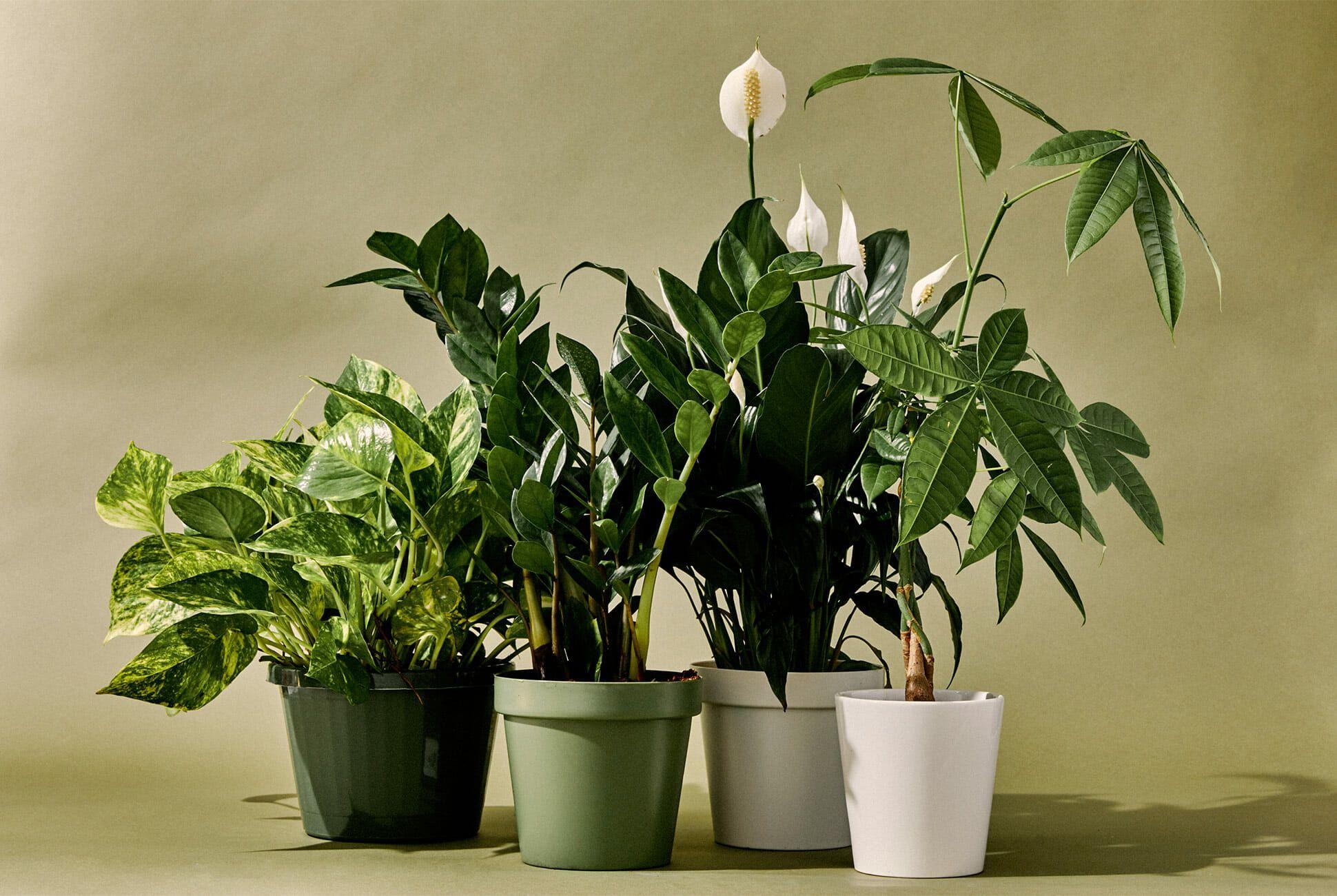 Types of Indoor Plants